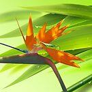 Bamboo and Preying Mantis by Gotcha29