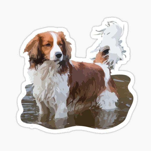Kooikerhondje in Water Dog Sticker