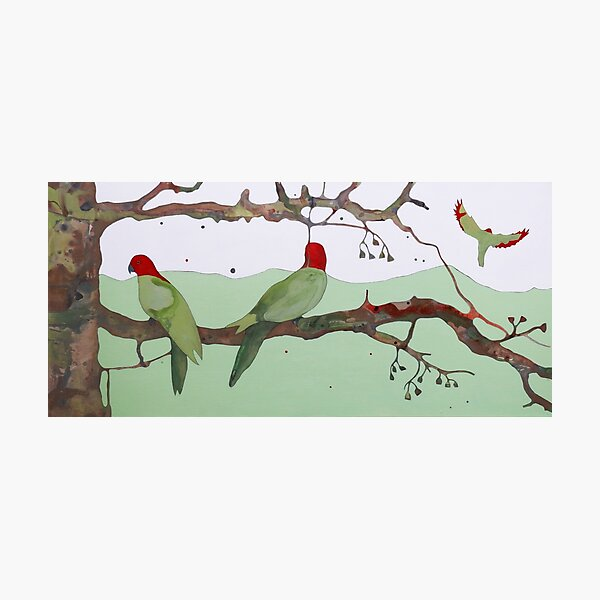 King Parrot Photographic Print