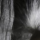 Milkweed by lumiwa