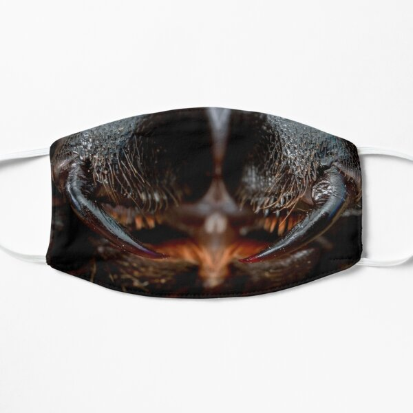 Masque de tête d'insecte: souris araignée (Missulena bradleyi) Masque sans plis