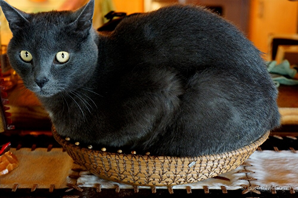 Cat In A Basket by © Loree McComb