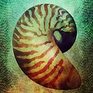 Nautilus by Gary Collins
