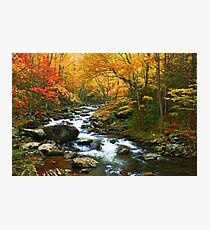 MIDDLE PRONG LITTLE RIVER,TREMONT Photographic Print