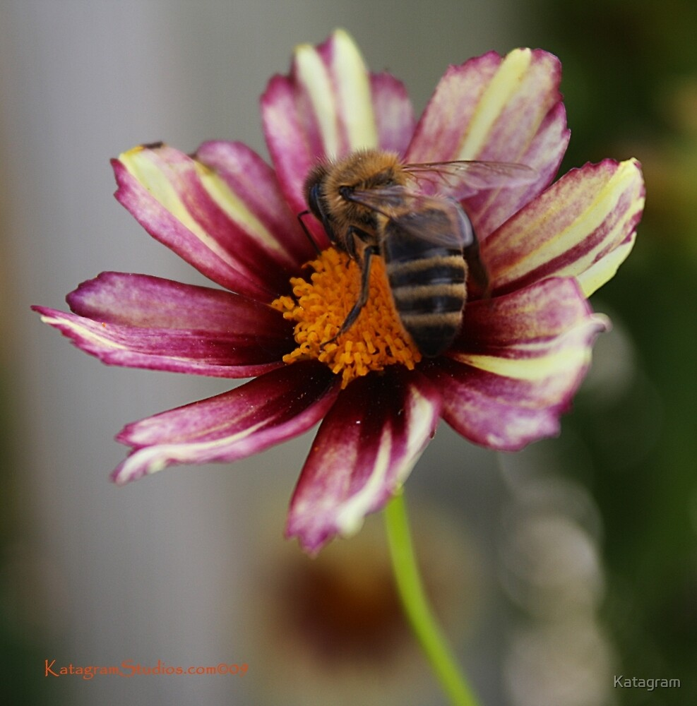 Beauty and The Bee by Katagram