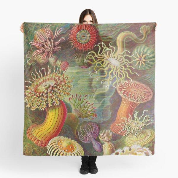 Sea anemone - Ernst Haeckel  Scarf