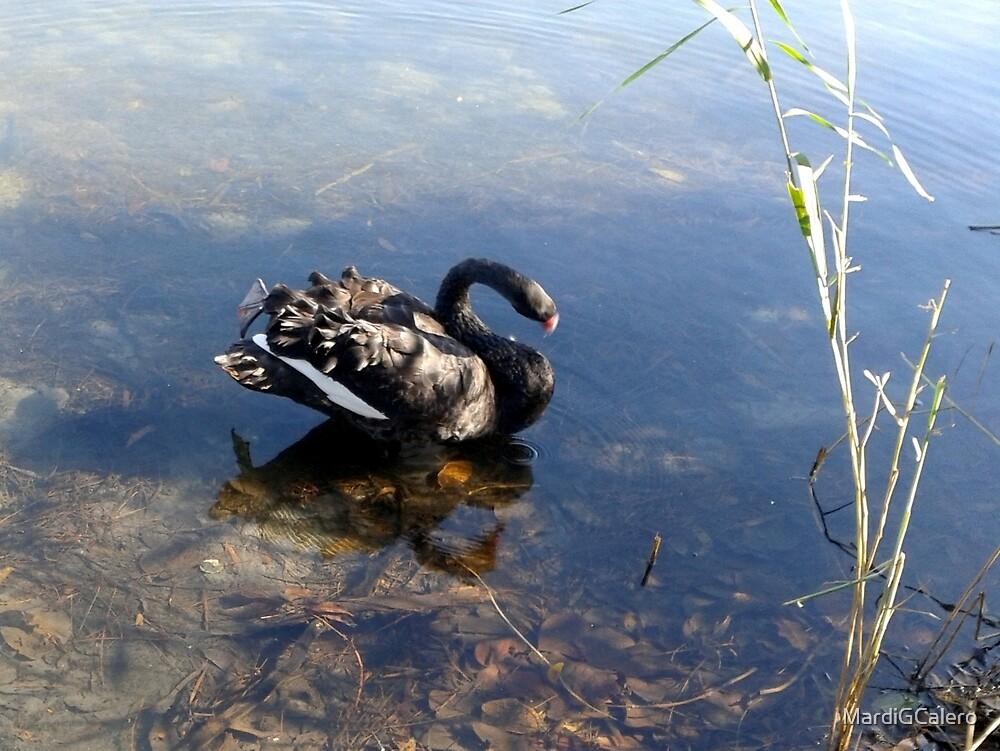 Black Swan on the Lake by MardiGCalero