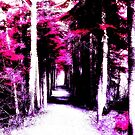 A Walk In Another Dimension by Stephanie Rachel Seely
