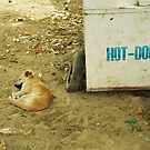 Hot dog by Bente Agerup
