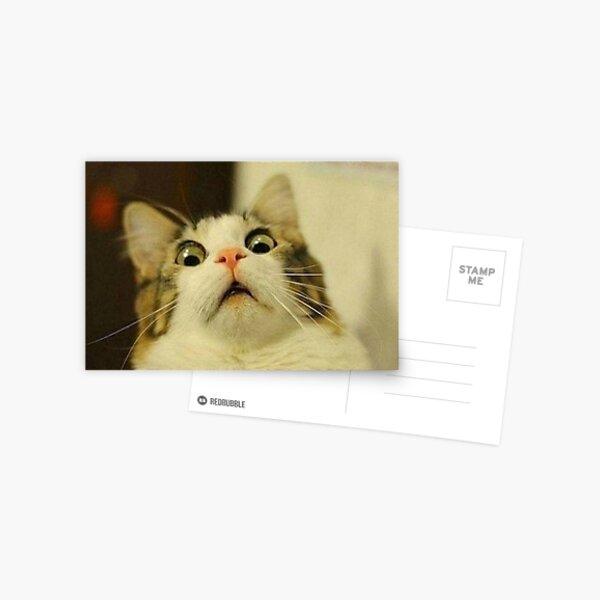weird cat Postcard