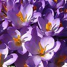 'Purple Haze' by wiggyofipswich