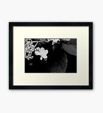 Water Droplet Framed Print