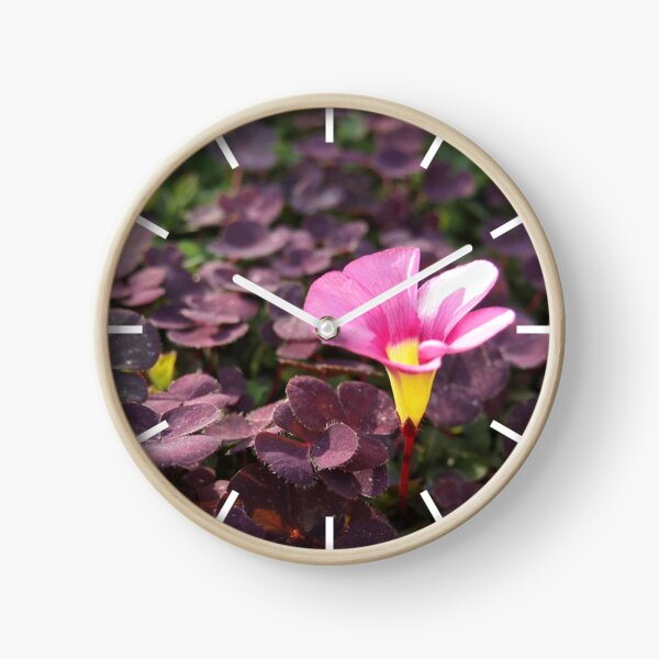 Pink Oxalis Flower Clock by Douglas E. Welch