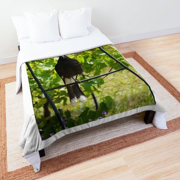 Pied Currawong, Australian bird Comforter