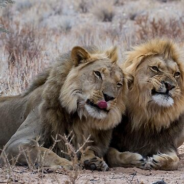 Two lion brothers with expressions by AdelevS19