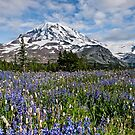 Pacific Northwest Landscapes by Jeff Goulden
