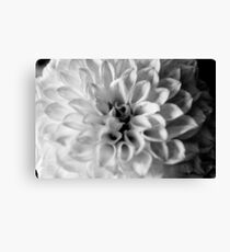 flower close up - black/white - six Canvas Print