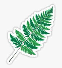 Dryopteris Fern Sticker