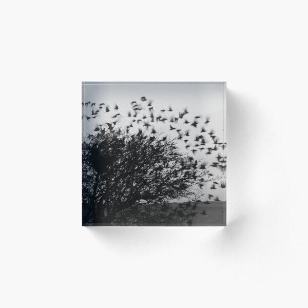 Starling Explosion Acrylic Block