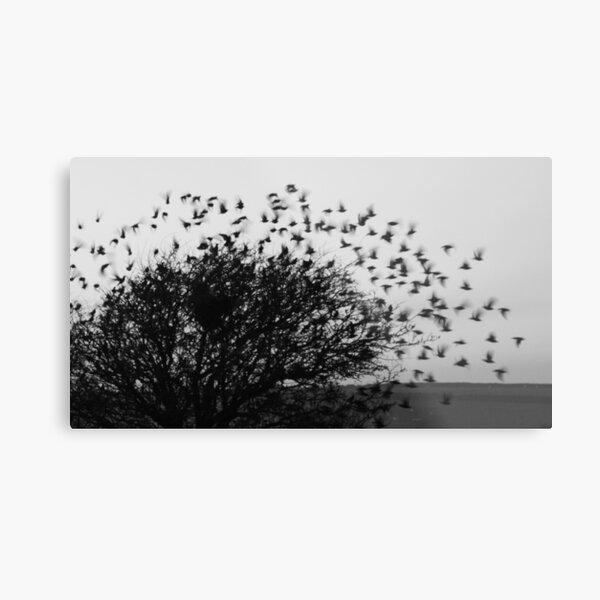 Starling Explosion Metal Print