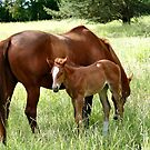 Mother And Foal - Christchurch by AndreaEL