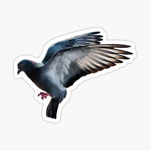 Pigeon Lover Gifts Merchandise Redbubble