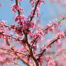 Texas Springtime by Kate Farkas