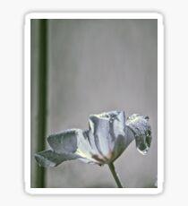 Wet Tulip - Infrared Sticker