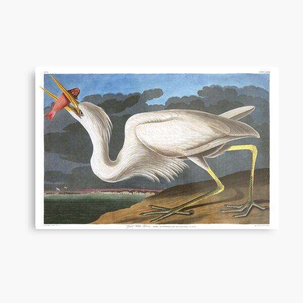 Great White Heron - John James Audubon Metal Print