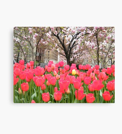 Colorful Spring Tulips, New York City Canvas Print