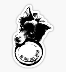 NO TAKE. ONLY THROW. (Border Collie) Sticker