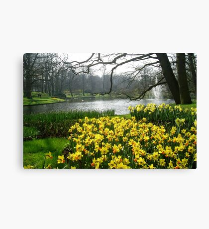 Daffodils in the Keukenhof Canvas Print