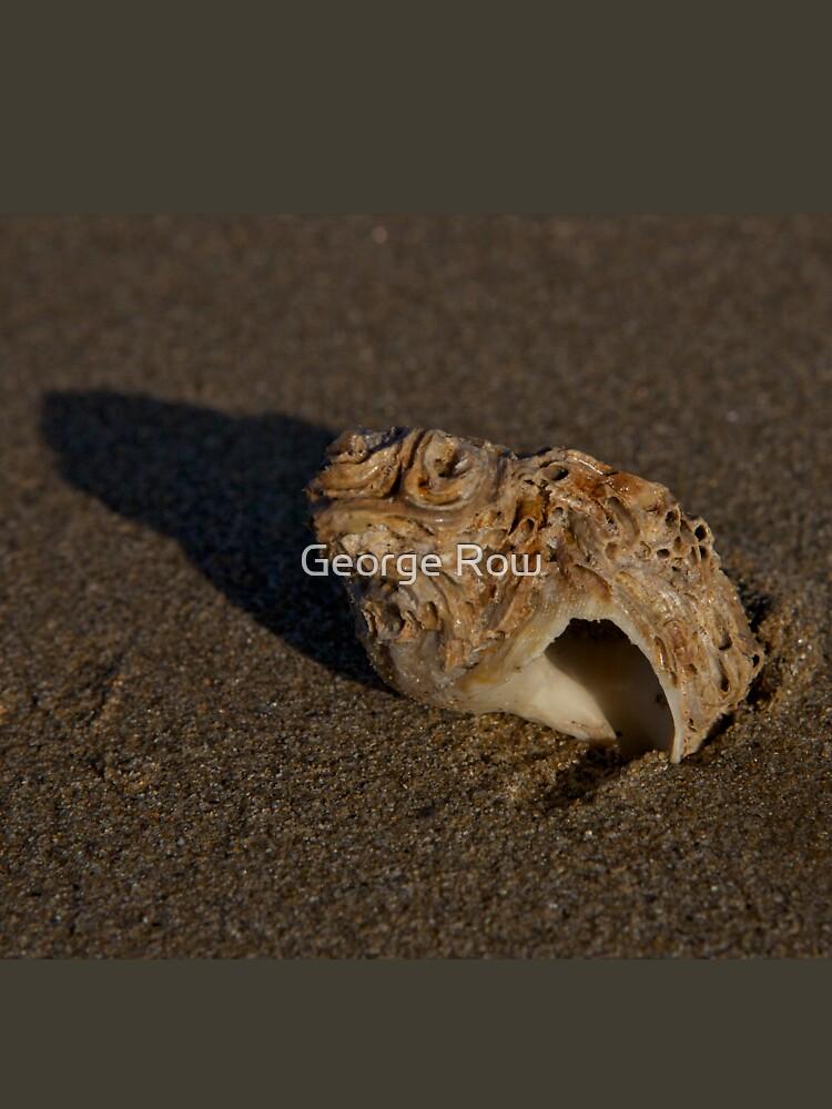 Weathered Whelk on Fahan Beach by VeryIreland