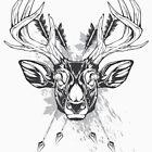 Wild deer by maximgertsen