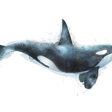 Orca de AmyHamilton