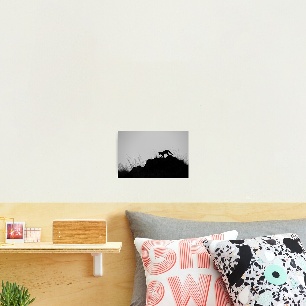 Monochrome Fox Photographic Print