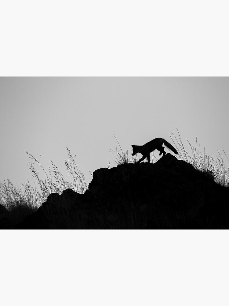 Monochrome Fox by LanceWilson