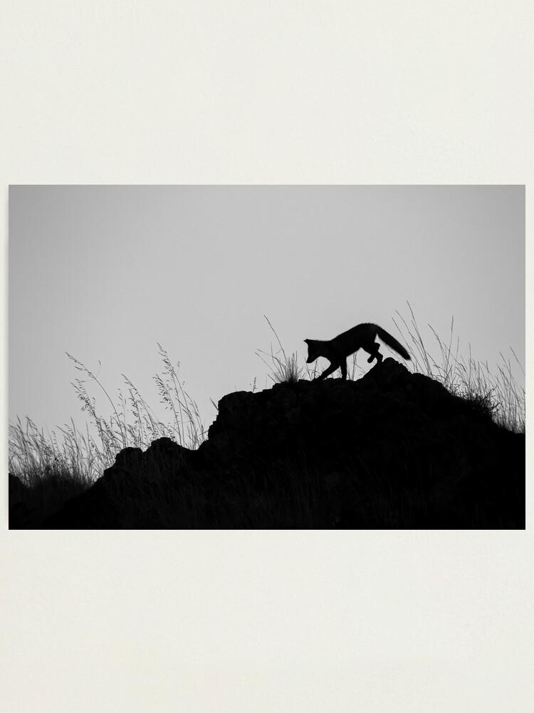 Alternate view of Monochrome Fox Photographic Print