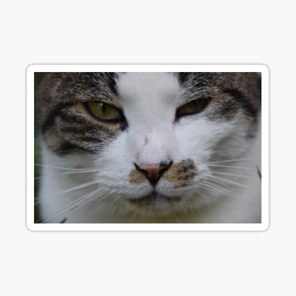 cat, look into your eyes Sticker
