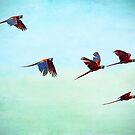 Scharlachrote Mackaws Flock von Peggy Collins