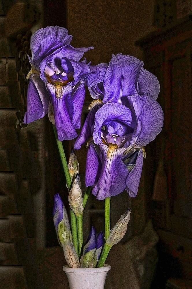 Iris on Black by Joy  Rector