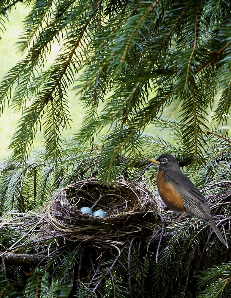 Robin With Eggs by Kenneth Hoffman