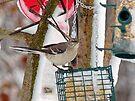 Mockingbird by FrankieCat