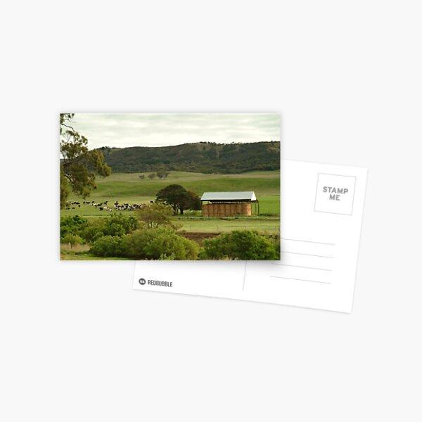 Joe Mortelliti Gallery - Grazing cattle, Rowsley valley, near Bacchus Marsh, Victoria, Australia. Postcard
