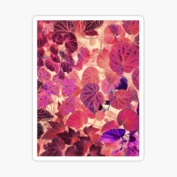 Synthwave Nature Pink and Purple Tropical Begonia Leaf Garden Sticker