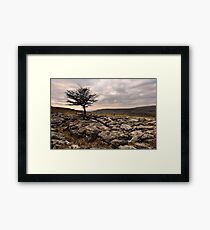 Limestone pavement Framed Print