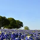 Bluebonnets in the Spring by Colleen Drew