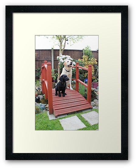 Garden Bridge by Vicki Spindler (VHS Photography)