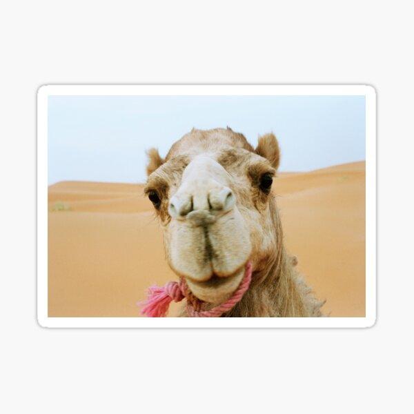 Camel Face - Morocco 2006 Sticker