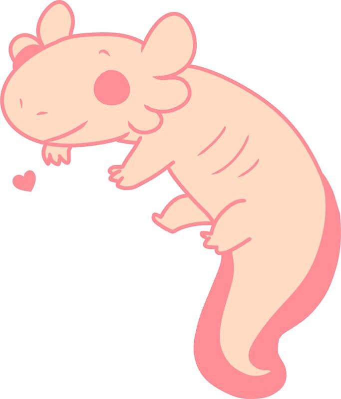 leucistic axolotl leucistic axolotl sticker stickers by pomeraniandoges redbubble